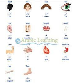 English to egyptian arabic dictionary